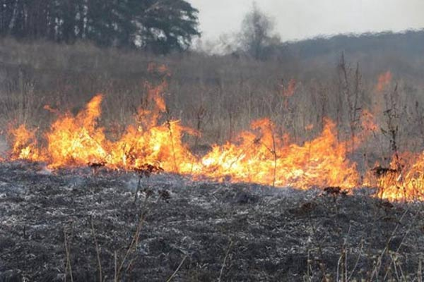 В Резекненском крае горело 100 га сухой травы