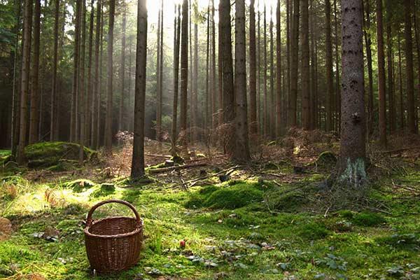 Спасатели отыскали заблудившуюся в лесу Резекненского края женщину