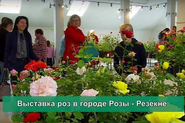 ВИДЕО: Выставка роз в городе Розы - Резекне